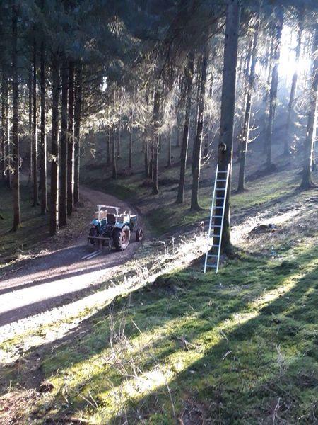 Nistkasten im Wald